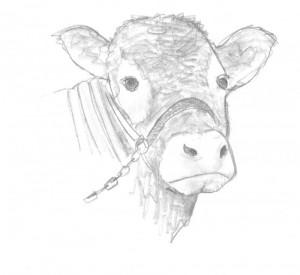 Rinder: Genomprojekt liefert Zuchtinformationen