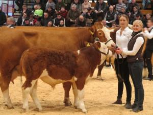 Rückblick Fleischrindertag in Alsfeld 2015